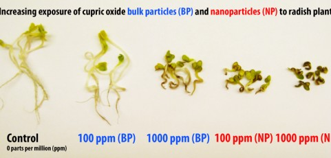 New study finds Nanoparticles damage plant DNA