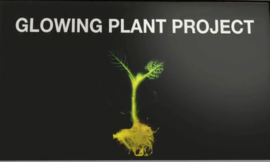 Glow in the dark synbio plants